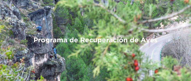 ES_RecuperacionAves